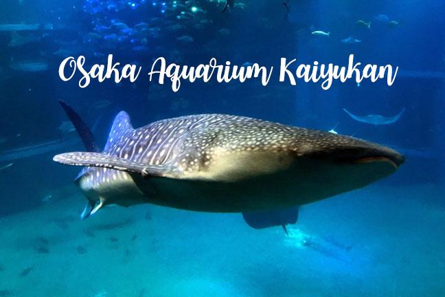 พาไปชมโลกใต้ท้องทะเลที่ Osaka Aquarium KAIYUKAN