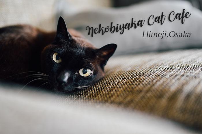 คาเฟ่แมวดำ Nekobiyaka Cat Cafe ฮิเมจิ โอซาก้า