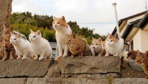 เที่ยวเกาะแมว Aoshima จังหวัดเอฮิเมะ