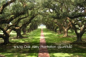 Oak Alley Plantation 3 copy