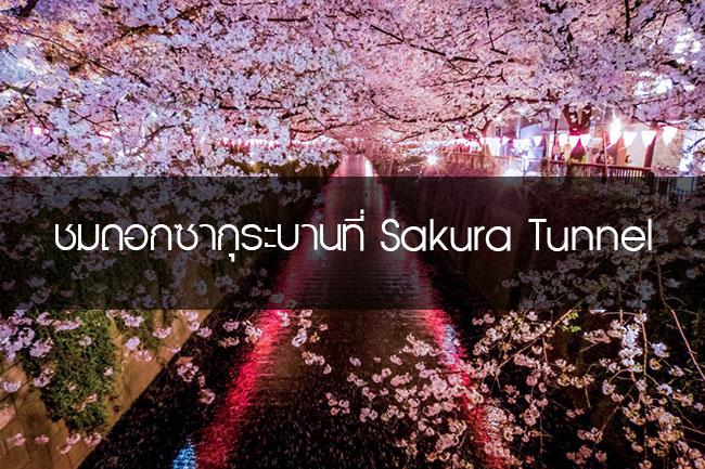 เที่ยวญี่ปุ่น ชมดอกซากุระบานที่ Sakura Tunnel ริมแม่น้ำ เมกุโระงะวะ