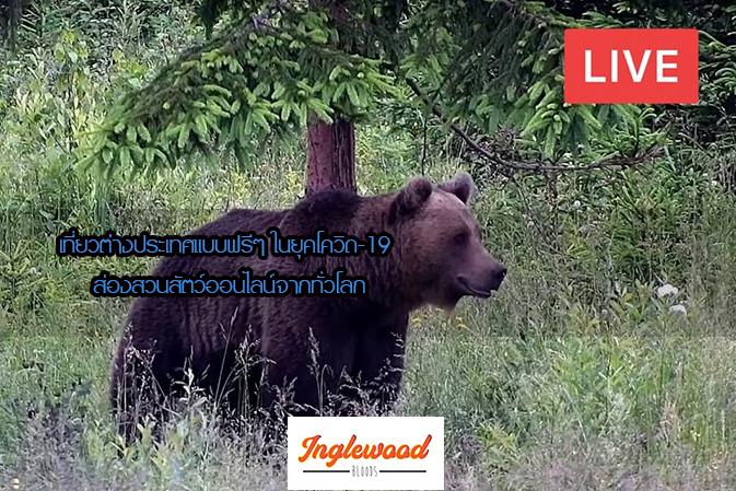 เที่ยวต่างประเทศแบบฟรีๆ ในยุคโควิด-19 พามาส่องสวนสัตว์ออนไลน์จากทั่วโลก