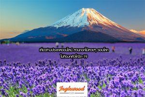 เที่ยวต่างประเทศ 2563 เที่ยวแบบออนไลน์ ชมสวนดอกไม้ จากทั่วทุกมุมโลก เที่ยวได้ไม่ต้องกลัวโควิด-19เที่ยวญี่ปุ่น ท่องเที่ยวต่างประเทศ ทริคการเดินทาง