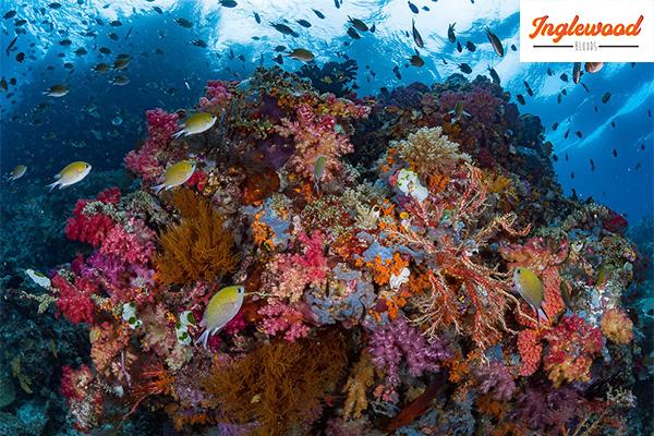 """ชวนเที่ยวท้องทะเลที่ เกาะปาปัวกินี """"ราชาอัมพัต"""" เที่ยวญี่ปุ่น ท่องเที่ยวต่างประเทศ เที่ยวอินโดนีเซีย เกาะปาปัวกินี"""